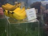 香蕉造型巧克力